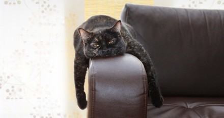 Mon chat s'ennuie, que faire ?