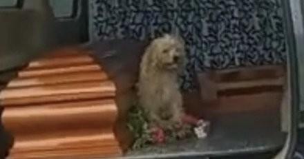 Pendant l'enterrement de sa maîtresse, le toutou a un geste qui émeut profondément tout le monde (vidéo)