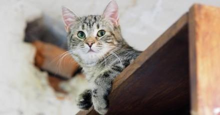 Les chats en Russie ? Ils sont gardiens de musée !