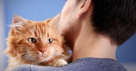 Comment bien réussir l'adoption de son chat ?