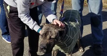 Un chien affamé est laissé pour mort sur un parking, 1 mois après ses sauveteurs peinent à le reconnaître (vidéo)