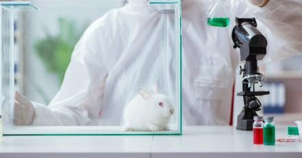 Vers une interdiction mondiale de l'expérimentation animale dans l'industrie des cosmétiques ?
