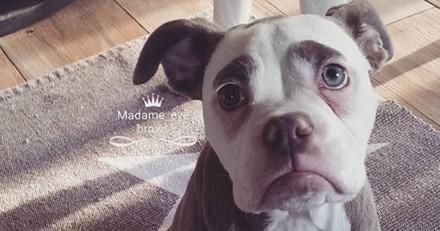 Cette chienne qui a l'air d'un clown triste est-elle vraiment déprimée ?