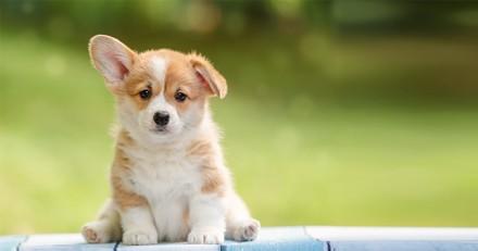 Bons plans - Les indispensables de l'été pour votre chien