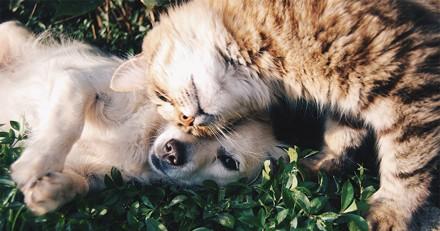 Soldes d'été Cdiscount : Les offres pour chien et chat à ne pas manquer