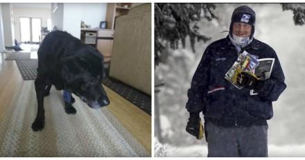 Tous les jours, ce chien salue le facteur mais un matin le chien n'était nulle part…