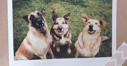 Anaïs, famille d'accueil pour animaux : « c'est une expérience humaine à vivre ! » (Interview)