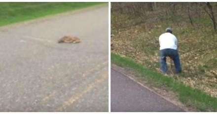 Il voit un chien au milieu de la route, s'approche et n'en revient pas de ce qu'il trouve devant lui