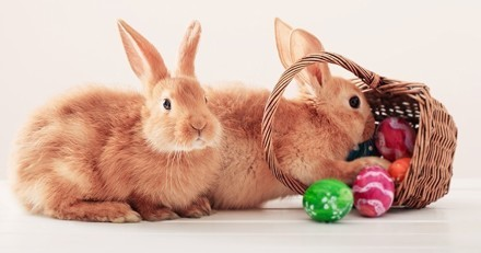 On lève le voile sur les origines… du lapin de Pâques !