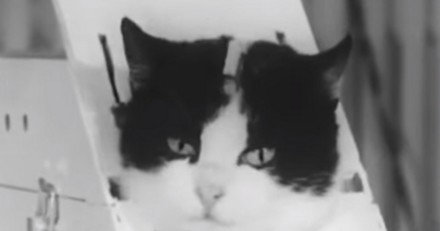Félicette, la première chatte à avoir survécu à l'espace