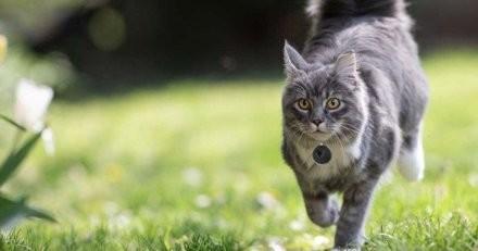 CES 2021 : Une entreprise française fait le buzz en présentant un collier connecté pour chats sans abonnement