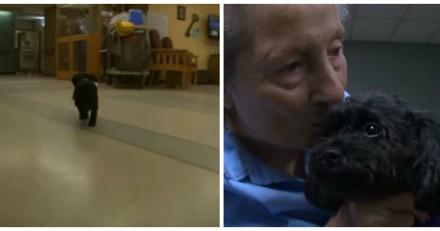 Ce tout petit chien fait chaque jour quelque chose qui donne les larmes aux yeux aux gens (Vidéo)