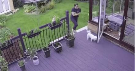 Des chiens n'écoutent pas les appels de leur maîtresse : le chat arrive et leur montre qui commande (Vidéo)