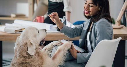 A Suresnes, les agents municipaux pourraient bientôt venir au travail avec leurs animaux de compagnie
