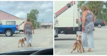 Il voit une femme frapper son chien et la filme : elle se met à rire et lui fait une proposition choquante