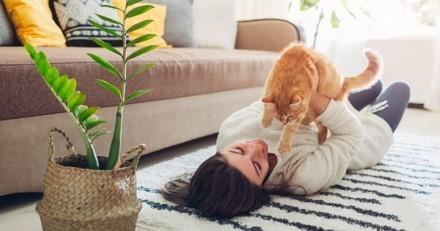Elle vole la carte bancaire de sa collègue et décide de l'utiliser pour son chat !