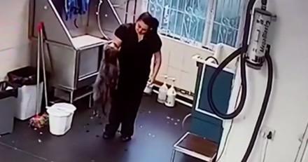 Une toiletteuse est accusée de maltraiter les animaux, la vidéo laisse tout le monde sous le choc