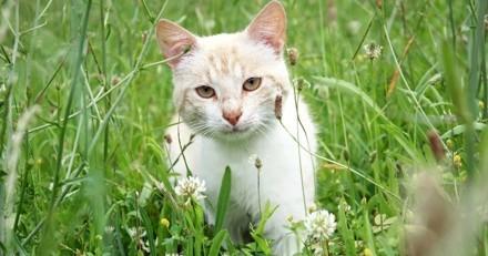 Nuisibles pour la faune, deux millions de chats doivent être abattus en Australie