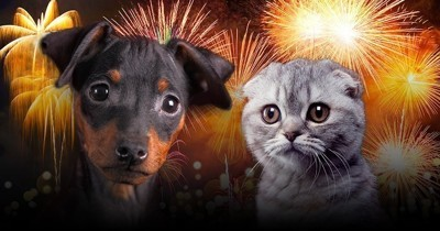 Nouvel an : attention aux feux d'artifice et aux pétards avec vos chats et chiens !