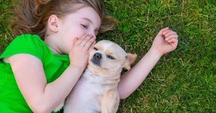 Les chiens pourraient catégoriser les mots comme les humains !