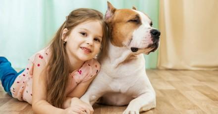 Une fillette de 10 ans se promène avec son Pitbull quand tout à coup l'impensable se produit
