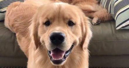 Elle regarde la télé avec son chien : quand il fait un bond du canapé, elle attrape tout de suite son téléphone (Vidéo)