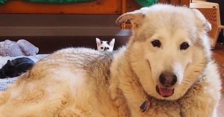 4 chatons rendent son sourire à un chien qui a perdu son meilleur ami (Photos)