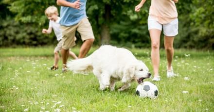15 chiens joueurs totalement mordus de foot ! (Photos)