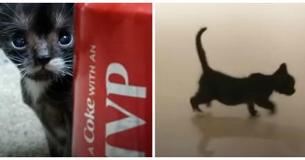 On lui confie un minuscule chaton, il devient un mini-chat absolument craquant (Vidéo)