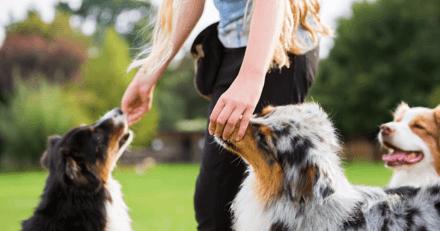Friandises pour chien : quand, comment, et en quelles quantités ?