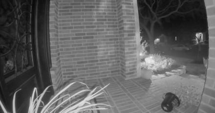 Son chat tente de le réveiller dans la nuit : le lendemain, il regarde la vidéo de surveillance et se fige