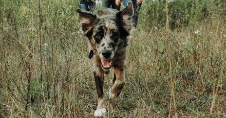 Son chien disparaît pendant une heure, quand elle comprend pourquoi elle éclate de rire