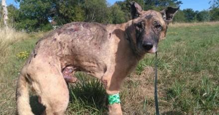 Les chroniques de Maître Terrin : Pour Fudji, le chien incendié dans un champ de maïs