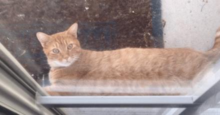 Il rencontre son chat dans un coin de la pièce, son chat le salue d'une voix humaine et c'est hilarant à voir (vidéo)