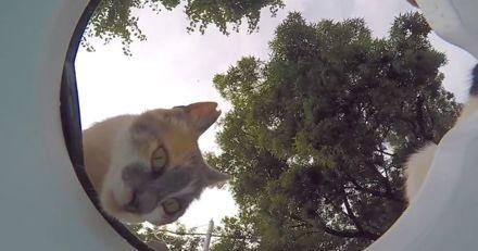 Il dépose une surprise pour les animaux errants sur le trottoir, leur réaction est très touchante (Vidéo)