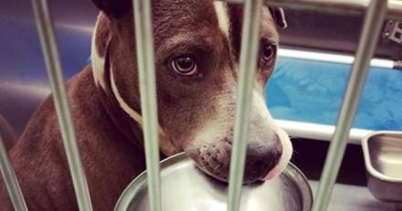 Ce chien de refuge refuse de se séparer de sa gamelle pour une raison qui bouleverse tout le monde