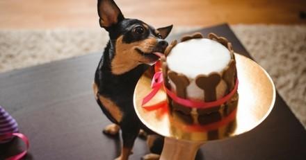 Sélection de gâteaux et gourmandises de Noël pour chiens et chats