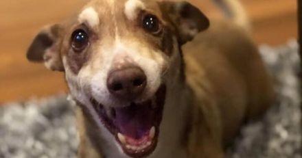 Cette famille fait une fête surprise pour les 13 ans de leur chien, et le toutou est absolument ravi (Vidéo)