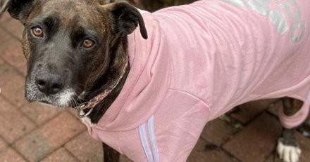 Chiots maltraités : toute la portée finit par être adoptée sauf une chienne à cause d'un détail incompréhensible