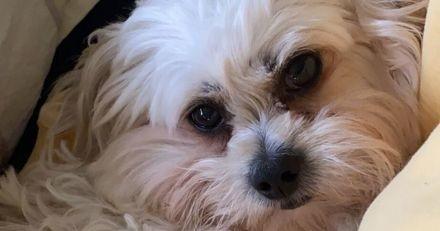 Un chien vole par la fenêtre du 2ème étage : tout le monde est estomaqué par ce qu'il se passe ensuite (Vidéo)