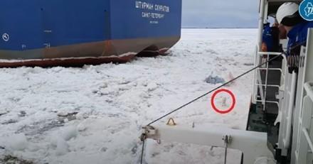 Des marins russes voient quelque chose d'étrange au milieu des glaces : ils décident de l'embarquer (Vidéo)