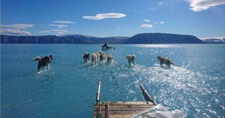 Ces chiens de traîneau marchent sur l'eau au centre d'un fjord du Groenland