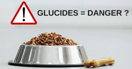 Glucides dans les croquettes  : mais pourquoi cela fait-il polémique ?