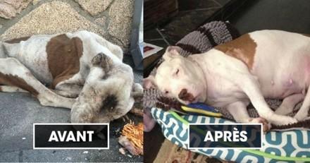 Avant/après : Il ne restait plus que quelques heures à vivre à cette chienne errante…