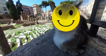 Google Maps prend une photo hilarante d'un chat errant !