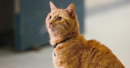 """Samuel L Jackson dans Captain Marvel : """"Je ne suis pas un homme à chats"""""""