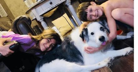 8 ans après sa disparition, ce chien a retrouvé sa famille (Vidéo)