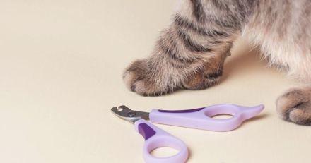 New-York pourrait devenir le premier État à interdire aux propriétaires d'animaux de dégriffer leurs chats