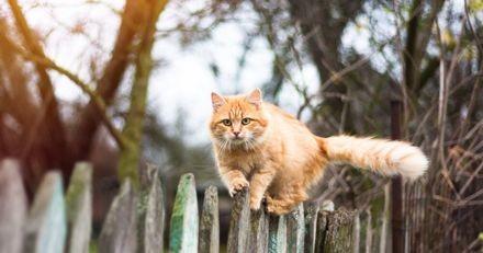 Après un an, ce chat d'extérieur a enfin accepté le couple qui a emménagé dans « son » appartement