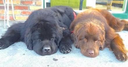 Ils pensaient adopter deux chiens « normaux » et n'en reviennent pas quelques mois plus tard